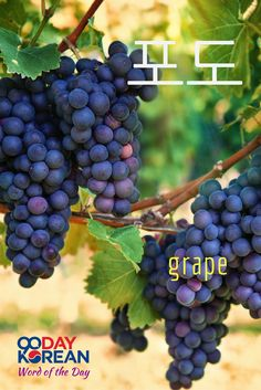 Can you use 포도 (grape) in a sentence? Write your sentence in the comments below!