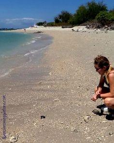 liberando in mare una tartaruga a serangan, bali