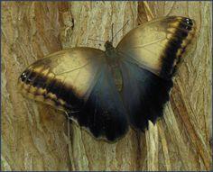 Фотографии тропических бабочек