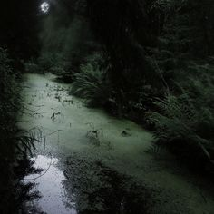 Swamp path leading to Kensia's compound Dark Green Aesthetic, Nature Aesthetic, Paradis Sombre, All The Bright Places, Slytherin Aesthetic, Luanna, Southern Gothic, Forest Fairy, Foto Art