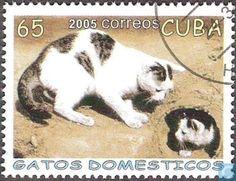 "Postage Stamps - Cuba [CUB] - House Cat ╬‴دكر ؟ والا نتايه ؟ نتايه ! و آدى زبرى﴾﴿ﷲ ☀ﷴﷺﷻ﷼﷽ﺉ ﻃﻅ‼ﷺ ☾✫ﷺ ◙Ϡ ₡ ۞ ♕¢©®°❥❤�❦♪♫±البسملة´µ¶ą͏Ͷ·Ωμψϕ϶ϽϾШЯлпы҂֎֏ׁ؏ـ٠١٭ڪ.·:*¨¨*:·.۞۟ۨ۩तभमािૐღᴥᵜḠṨṮ'†•‰‽⁂⁞₡₣₤₧₩₪€₱₲₵₶ℂ℅ℌℓ№℗℘ℛℝ™ॐΩ℧℮ℰℲ⅍ⅎ⅓⅔⅛⅜⅝⅞ↄ⇄⇅⇆⇇⇈⇊⇋⇌⇎⇕⇖⇗⇘⇙⇚⇛⇜∂∆∈∉∋∌∏∐∑√∛∜∞∟∠∡∢∣∤∥∦∧∩∫∬∭≡≸≹⊕⊱⋑⋒⋓⋔⋕⋖⋗⋘⋙⋚⋛⋜⋝⋞⋢⋣⋤⋥⌠␀␁␂␌┉┋□▩▭▰▱◈◉○◌◍◎●◐◑◒◓◔◕◖◗◘◙◚◛◢◣◤◥◧◨◩◪◫◬◭◮☺☻☼♀♂♣♥♦♪♫♯ⱥfiflﬓﭪﭺﮍﮤﮫﮬﮭ﮹﮻ﯹﰉﰎﰒﰲﰿﱀﱁﱂﱃﱄﱎﱏﱘﱙﱞﱟﱠﱪﱭﱮﱯﱰﱳﱴﱵﲏﲑﲔﲜﲝﲞﲟﲠﲡﲢﲣﲤﲥﴰ ﻵ!""#$69٣١@"