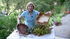 Refresh an Overgrown Succulent Container Garden