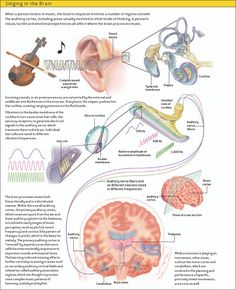 Box 2 : Music And The Brain : Scientific American ANDREW SWIFT