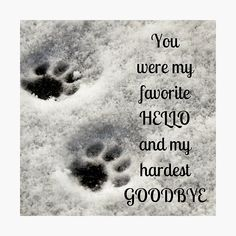 I Love Dogs, Puppy Love, Cute Dogs, Pet Loss Grief, Loss Of Dog, Dog Poems, Pet Remembrance, Dog Memorial, Losing A Pet
