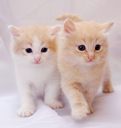 Cute kitties