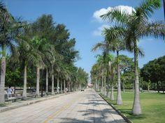 Palm tree Xiamen - China