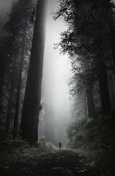 Lost in the Oldest of Forests. California Redwood. Wilderness Campsites. - Outdoor Ideas