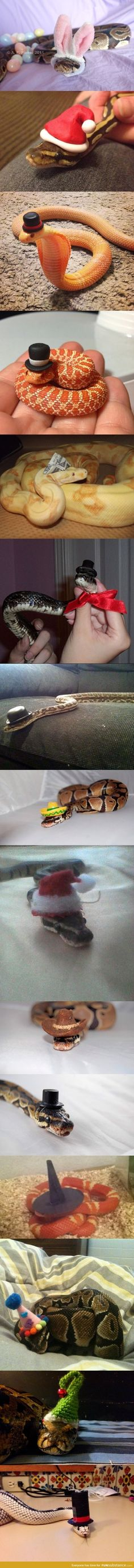 Snakes with hats.my snake is going to hate me. Animals And Pets, Baby Animals, Funny Animals, Cute Animals, Cute Creatures, Beautiful Creatures, Animals Beautiful, Cute Reptiles, Reptiles And Amphibians