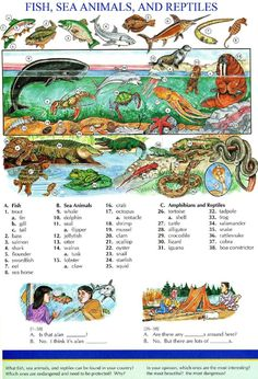 115 - FISH, SEA ANIMALS, AND REPTILES - Picture Dictionary - English Study…