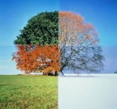 Seasons of life.it may look different in spring,summer, fall and winter. But it is still the same tree. Through the seasons of life we just have to see the beauty in all of them. Seasons Of Life, Four Seasons, Time Lapse Photography, Photography Ideas, Creative Photography, Amazing Photography, Digital Storytelling, Feng Shui, Ecclesiastes 3