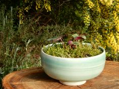 Copper glazed planter with cyclamen and moss   Dianne Collins, Melbourne
