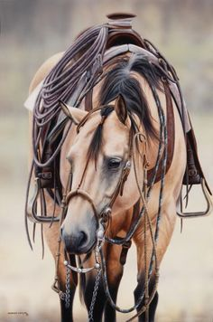 Adorned with fine vaquero inspired gear, 'Chello' represents the epitome of a fine bridle horse many of us have come to appreciate and admire. All The Pretty Horses, Beautiful Horses, Animals Beautiful, Paint Horse, Horse Artwork, Horses And Dogs, Work Horses, Show Horses, Horse Gear