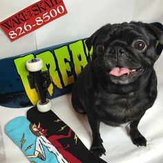Indy was so happy when we came home with a new board and some cozy socks tonight! Thanks @wake_and_skate_skateshop for always giving us the hookup and for always loving Indy! She's dreaming about all of the fun times she's gonna have next summer on this beauty. But for now she's gonna cozy up next to the fireplace.  by indyrecordshop