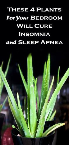 These 4 Plants For Your Bedroom Will Cure Insomnia and Sleep Apneaa