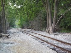 tracks at wolf lake