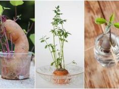 Foods & Herbs can regrow - Don't throw away your food scraps! Instead, learn how you can regrow your favorite vegetables, herbs and spices for an endless supply of free food.
