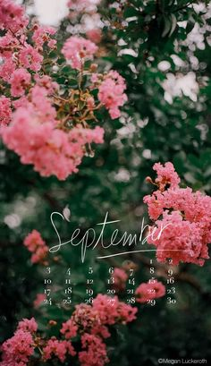 FREE DOWNLOAD - September 2017 mobile and iPhone wallpaper/calendar. By Megan Luckeroth