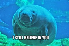 Calming Manatee - this site is always an amazing pick-me-up, especially during finals!