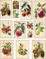 decoupage paper fruit Collage Sheet pears strawberries apples