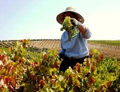 Las profesiones del vino http://www.vinetur.com/posts/1251-las-profesiones-del-vino.html