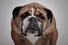 https://flic.kr/p/zrUCP8 | Happy Monday | Dog portrait photography in Milton Keynes: www.bt-photography.co.uk/pets