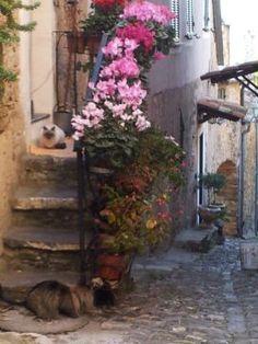 #Liguria, Laigueglia Colla Micheri, going around the medioeval roads of the village