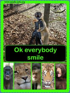 Ok, Everybody SMILE!!   www.noahs-ark.org #LOL #Meme #Animal #Funny #humor #lemur #photographer #baboon #lion #capuchin #tiger #bear