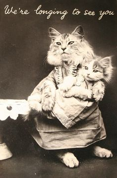 Photo by Harry Whittier Frees. Undated postcard.... | Old-Timey Cats