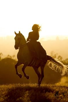 A horse is a thing of beauty... none will tire of looking at him as long as he displays himself in his splendor. -Xenophon