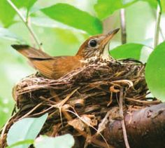 A Call For Backyard Biodiversity | American Forests