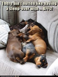 Oh my gosh...the cuteness is almost unbearable. I want this doggy pile!