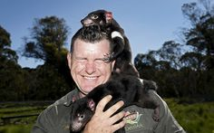 A pair of Tasmanian devil joeys climb over Devil Ark Sanctuary manager Dean Reid before the first shipment of healthy and genetically diverse devils are shipped to the island state of Tasmania. The largest group so far of disease-free Tasmanian devils has been released in to the wild as part of plans to save the carnivorous marsupials from a cancer threatening them with extinction.