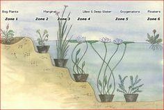 Planting a Pond