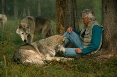 Google Image Result for http://twowisegals.files.wordpress.com/2012/10/jim-jamie-dutcher-sawtooth-pack-wolves-main1.jpeg