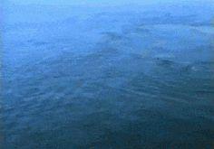 Humpback Whale Bubble Rings