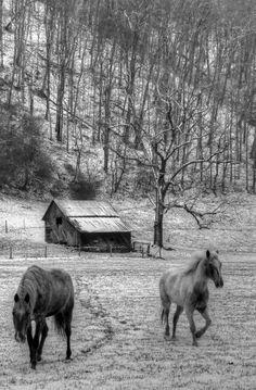 Mercer County in West Virginia