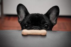 Batpig & Me Tumble It • You will be mine, oh yes, you will be mine… (extra...