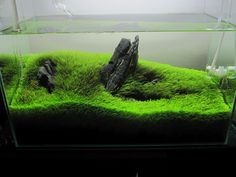 Not ideal, not exactly sure why. The rocks are dull and the green.too long Saltwater Tank, Saltwater Aquarium, Planted Aquarium, Freshwater Aquarium, Aquarium Fish, Home Aquarium, Nature Aquarium, Aquarium Design, Aquascaping