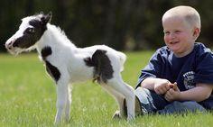 World's Smallest Stallion - Einstein