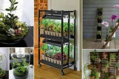 Do you want to use plants to add some flair to your indoor space? You have come to the right place. Check out below for some ideas on building an indoor garden and styling your Ways To Recycle, Reuse, Garden Planters, Indoor Garden, Plastic Bottles, House Plants, Easy Diy, Recycling, Outdoor Structures