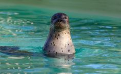 Why Seals Might Love Having More Wind Farms