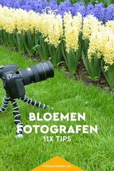 Bloemen fotograferen: 11 tips • Vink Academy Studio Setup, Photography Tips, Selfie, Film, Creative, Flowers, Plants, Instagram, Camper