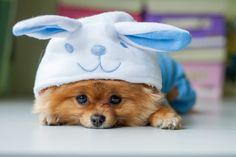 Tutkimus:+Koirat+muistavat+omistajiensa+tekoja
