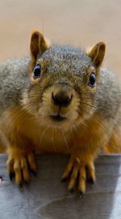 Squirrel Interrupted by Dennis Reagan in San Diego, California, USA.