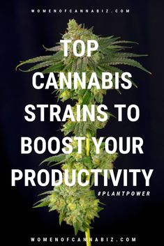 Try these cannabis strains to boost your productivity. Muscle Spasms, Marijuana Plants, Cannabis Growing, Increase Productivity, Cancer Cure, Ganja, Medical Marijuana, Hydroponics, Weed