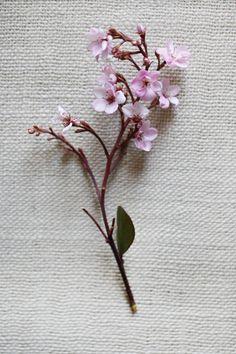 Tree branch garden blossom