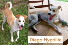 Familia Basset Hound: Animais resgatados - Proteção Animal mundial