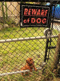 Beware of dog... ferocious