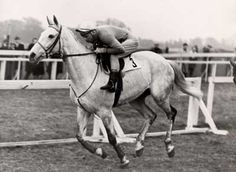 Nicolaus Silver is the last grey to win Grand National - 1961