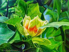 I dipinti di Giada: L'albero dei tulipani (Liriodendron Tulipifera)